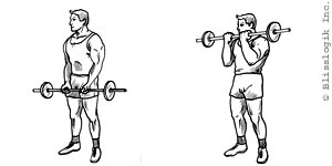 Barbell Bicep Exercises