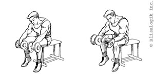 Forearms Dumbbell Exercises